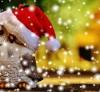 Werknemers worden extra verwend met kerst
