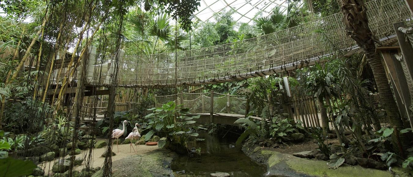Center Parcs Het Heijderbos -  Jungle Dome