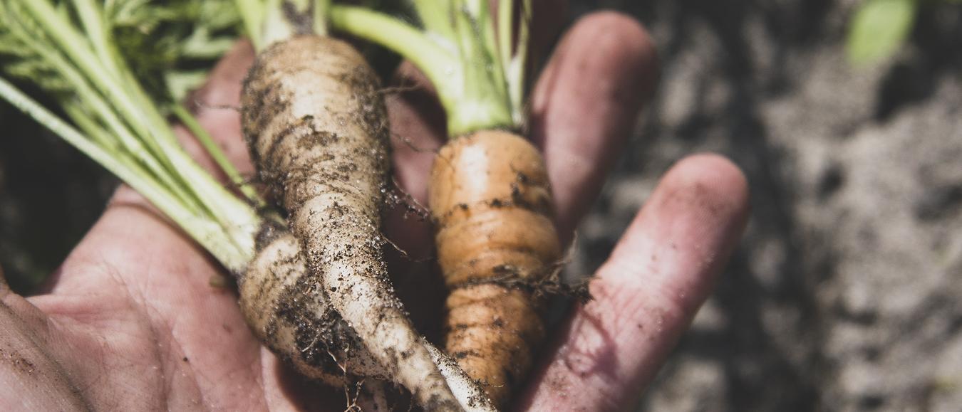 Blooming gaat voor een nog groener foodconcept