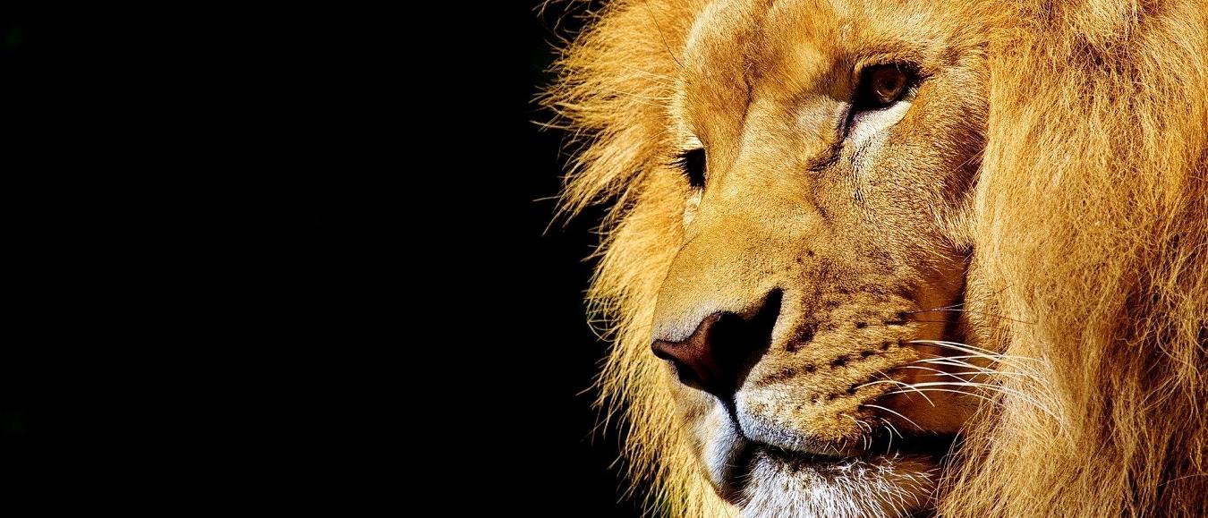 Nieuwe look & feel voor Lion Event Support