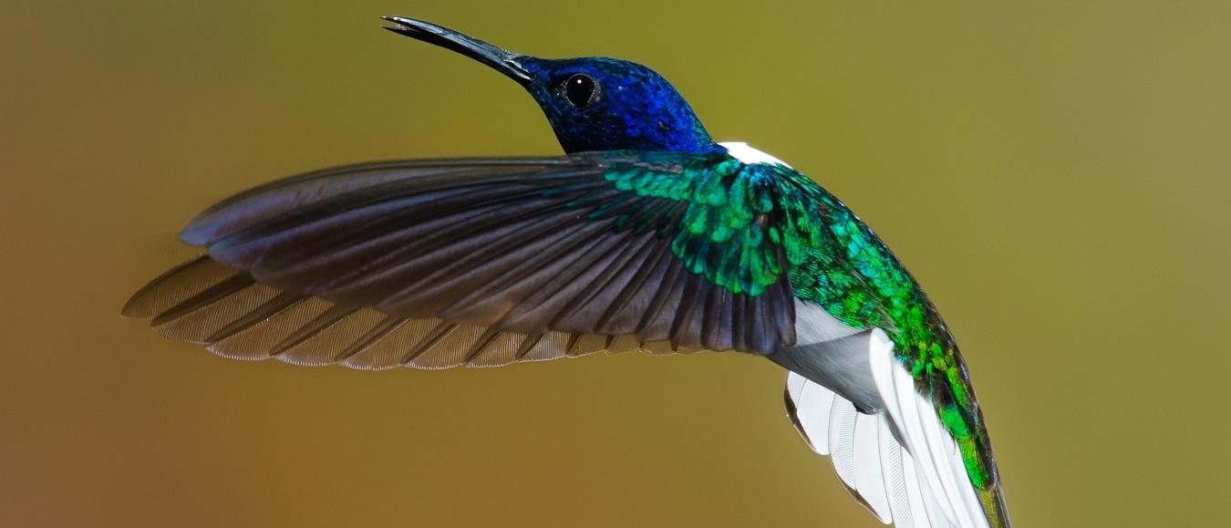 ShowBird neemt Plugify onder de vleugels