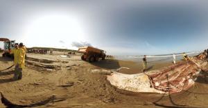 Virtual reality beelden van ontleding aangespoelde vinvis Texel