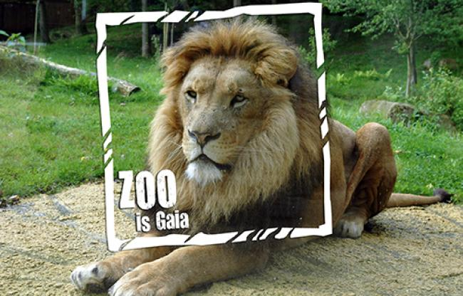 Hof van Gaia - GaiaZOO Business & Events