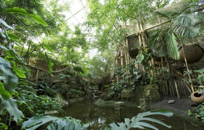 Jungle Dome bij Center Parcs Het Heijderbos