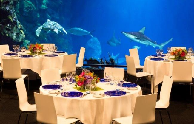 Diner naast haaien, schildpadden en barracuda's