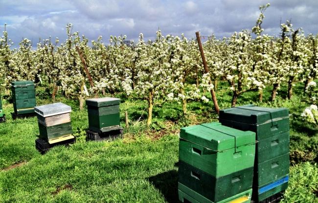 Bijenkorf in boomgaard