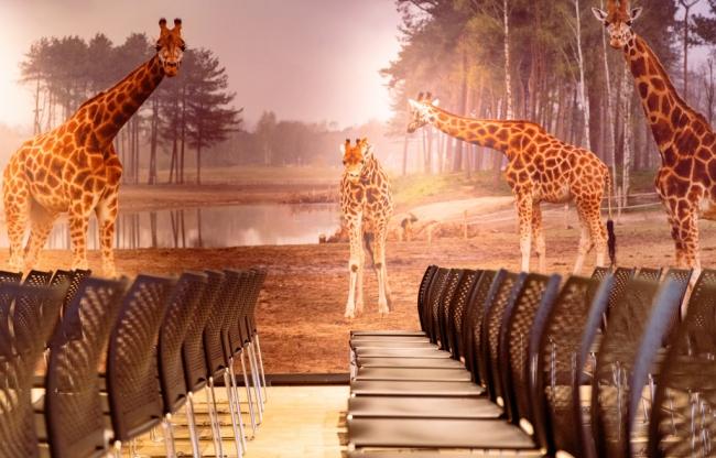 Serengeti Lounge