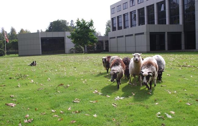 Teamspirit bevorderen in de vrije natuur van De Ruwenberg