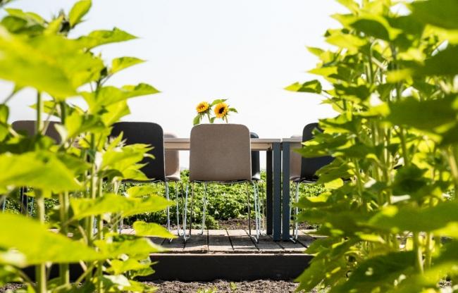 Vergaderen midden in de polder tussen de zonnebloemen