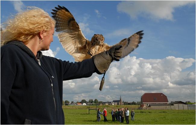 roofvogel workshop www.valkenieren.nl