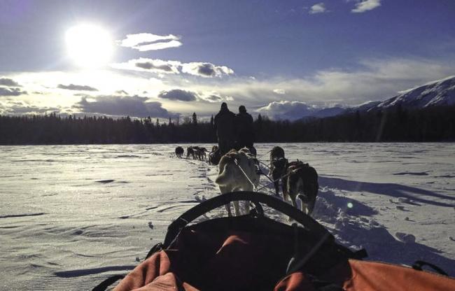 Sledehonden rijden in Canada