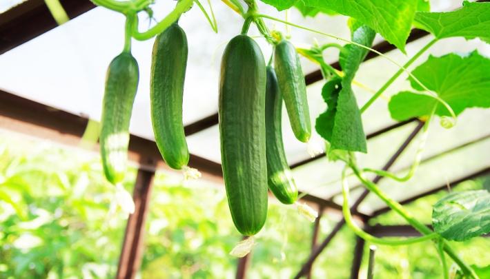 Dit zijn de komkommercolumnisten van 2019