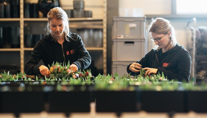 Wolterinck Event Decoration zorgt voor fleurige thuiswerkbooster