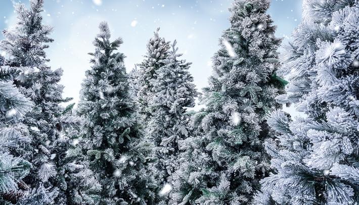Duurzame kerstbomen bij de Werkspoorkathedraal