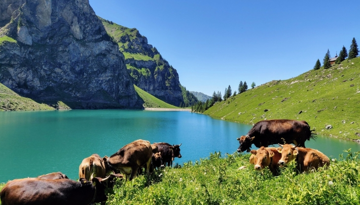 Spread Swiss Happiness!