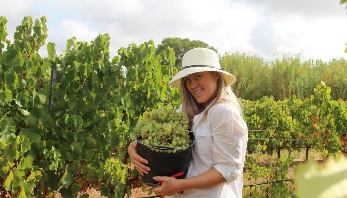Meisjes van de Wijn oogsten in Portugal